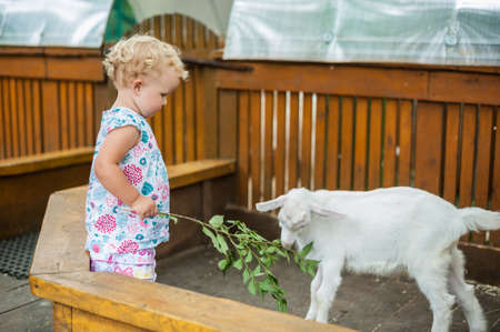 petting: Toddler girl play with the lamb in the petting zoo