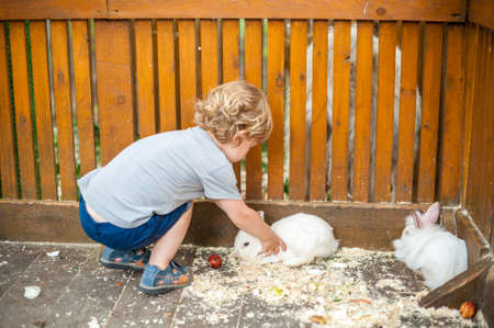 Toddler jongen spelen met de konijnen in de kinderboerderij