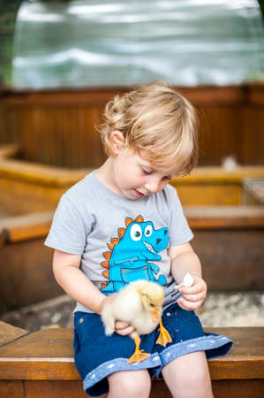 compañerismo: Toddler boy play with the ducklings in the petting zoo