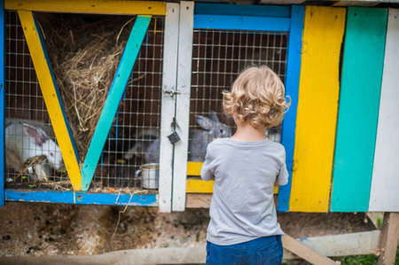toddler boy: Toddler boy play with the rabbits in the petting zoo