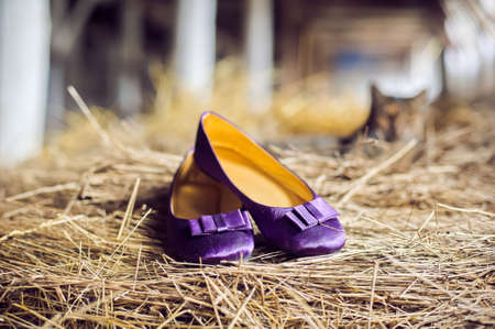 Violet shoes and a cat in the manger