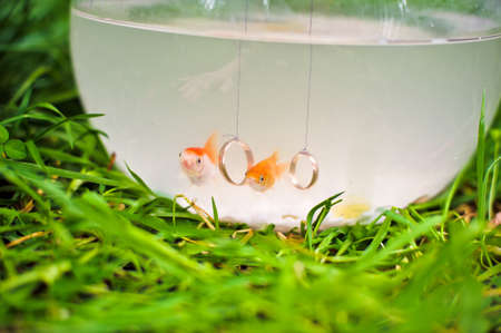 Goldfish in a fishbowl on a green grass Stock Photo