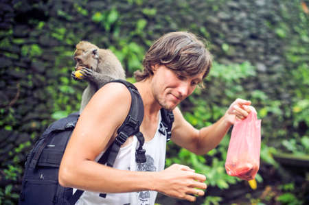 The monkey climbed to a man, Bali, Indonesia Stock Photo