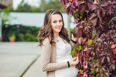 lovely pregnant woman: A pregnant young woman standing at the red autumn hedge, holding belly. pregnant woman relaxing in the park. Lovely prospective mother Stock Photo