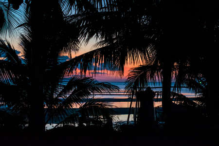 pink sunset: Silhouette of palm trees and a pink sunset on a tropical island