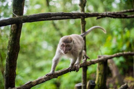 Monkeys in the monkey forest, Bali, Indonesia