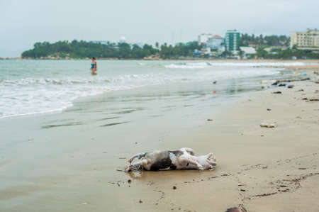 drowned: Drowned dead dog after the storm washed ashore
