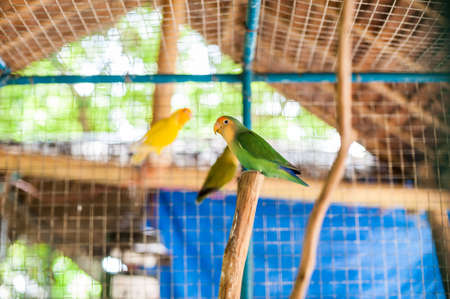 coraciiformes: Tropical birds in the Philippines, tropical birds concept