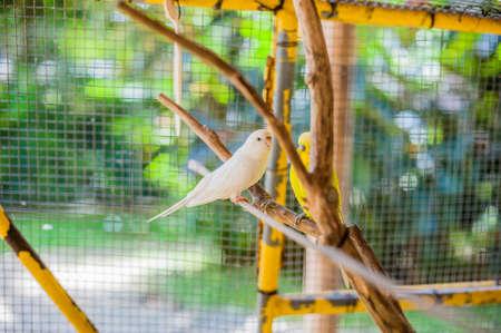 Oiseaux tropicaux aux Philippines, concept d'oiseaux tropicaux