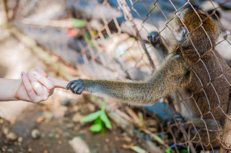 Monkey looking through the bars and holding a mans hand