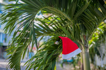 tropical climate: Red Santas hat hanging on palm tree at the tropical beach. Christmas in tropical climate concept.