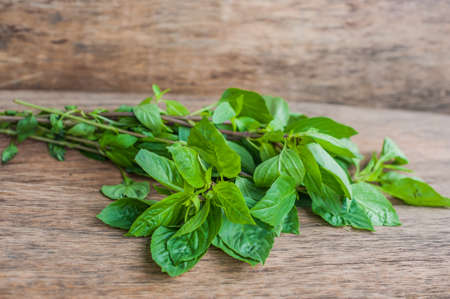 bunch of fresh organic basil on rustic wooden background. Stock Photo