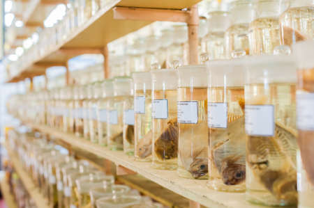 Marine animals preserved alcohol in glass tubes. Ichthyology concept Stock Photo