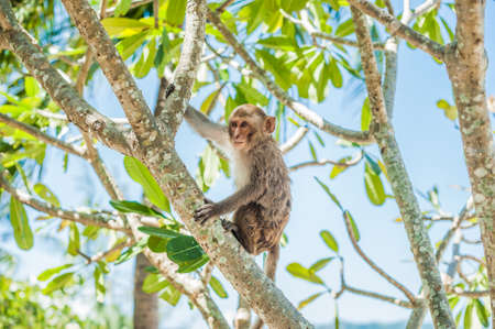 Macaque monkey sitting on the tree. Monkey Island, Vietnam, Nha Trang