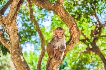 Macaque monkey sitting on the tree. Monkey Island, Vietnam, Nha Trang