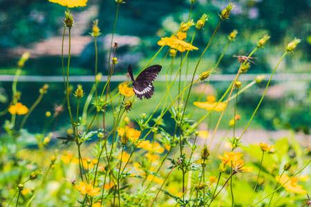 Mariposa en una flor tropical en un estilo de mariposa . Foto de archivo - 76671638