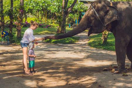 엄마와 아들은 열대 지방에서 코끼리에게 먹이를줍니다.