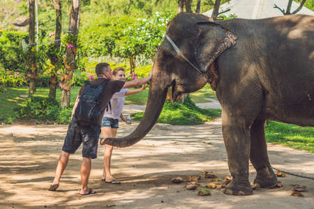 Man and woman feed the elephant in the tropics. Stock Photo