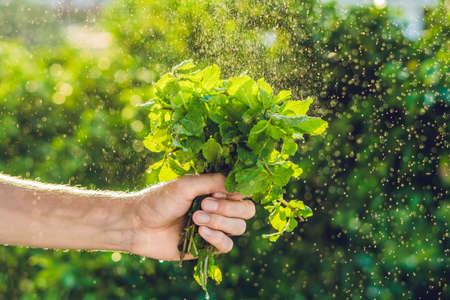 손에 민트와 녹색 배경에 물 스플래시의 무리.