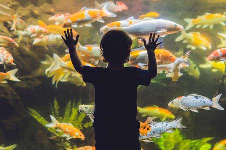 수족관 물고기를보고하는 소년의 실루엣.