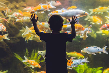 Silhouette of a boy looking at fish in the aquarium.