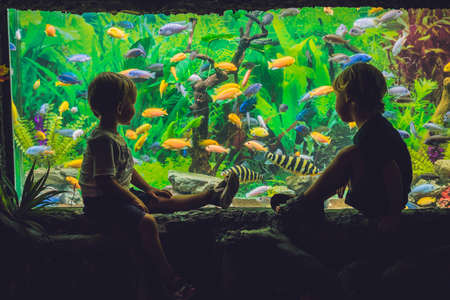Two boys look at the fish in the aquarium. 스톡 콘텐츠