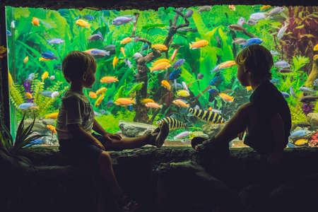 Two boys look at the fish in the aquarium. Archivio Fotografico