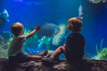oceanic: Two boys look at the fish in the aquarium. Stock Photo