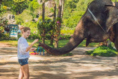woman feed the elephant in the tropics.