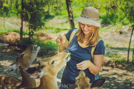 Young woman feeding beautiful deer from hands in a tropical Zoo. Stock Photo