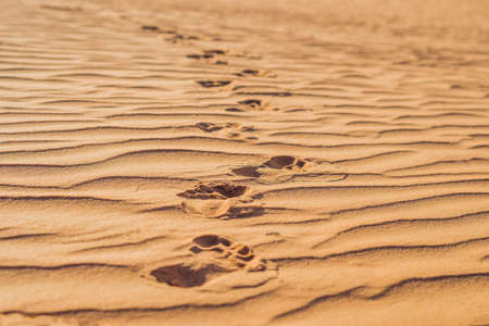 enigma: Footprints in the sand in the red desert at Sunrise.