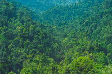 ベトナム ・ ダラット山、新鮮な雰囲気、森、丘、高いビュー、春のエコツー リズムのための素晴らしい休暇から山の形は印象の中でヴィラの幻想