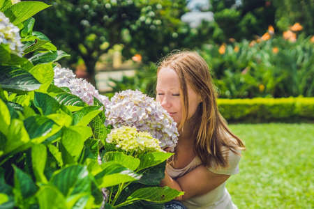 hydrangea macrophylla: Young woman on the background of light Pink hydrangea flowers blooming in the garden Stock Photo