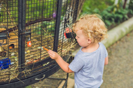 lapin: girl is feeding rabbits in the petting zoo. Banque d'images