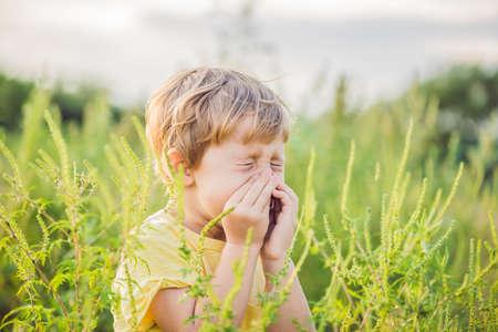 소년은 ragweed에 알레르기 때문에 재채기를합니다. 스톡 콘텐츠