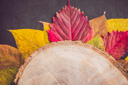 Autumn leaves over wooden background with copy space.