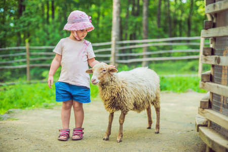 little girl with lamb on the farm. Stock Photo