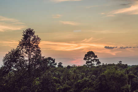 Red sunset over the rain forest. Evening