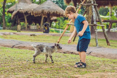 Small cute boy is feeding a small newborn goat. Stock Photo