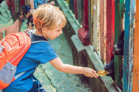 The boy feeds goats in the zoo. Stock Photo