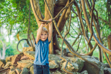 boy watching tropical lianas in wet tropical forests. Stock Photo