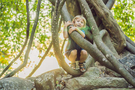 boy watching tropical lianas in wet tropical forests. 写真素材