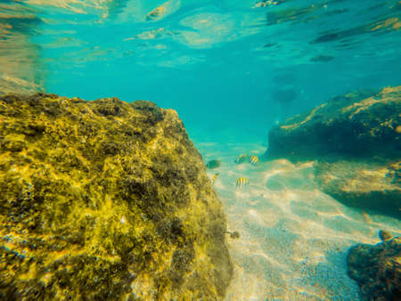 Tropical fish and corals in the sea under water. Stock Photo
