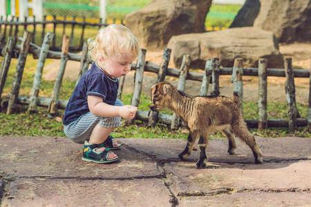 Small cute boy is feeding a small newborn goat. Stockfoto
