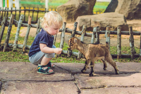 Small cute boy is feeding a small newborn goat. Stock Photo