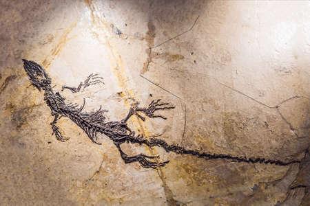 Pterodactilus Spectabilis, prehistoric animals, trilobite imprint in the sediment, Dinosaur.