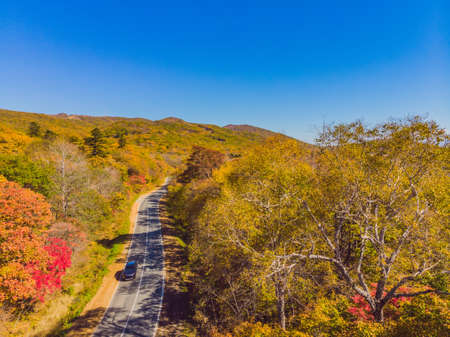 Aerial view of road in beautiful autumn forest at sunset. Beautiful landscape with empty rural road, trees with red and orange leaves. Highway through the park. Top view from flying drone. Nature.