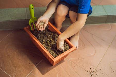 Little cute boy sows seeds in a flower pot in the garden. Stock Photo