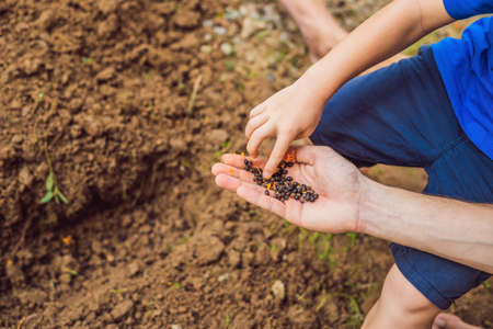 Child sowing vegetables in the home garden. Sow carrots, beets, fennel. Spring gardening.