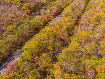 Aerial top down view of autumn forest with green and yellow trees. Mixed deciduous and coniferous forest. Beautiful fall scenery. Stock Photo